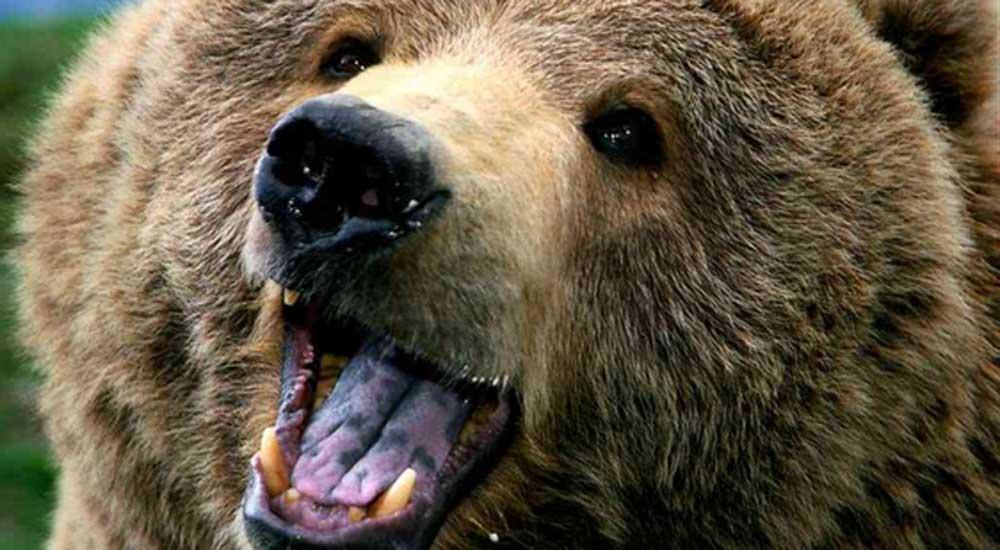 la-pelle-dell-orso-orso-italy-movie-walks